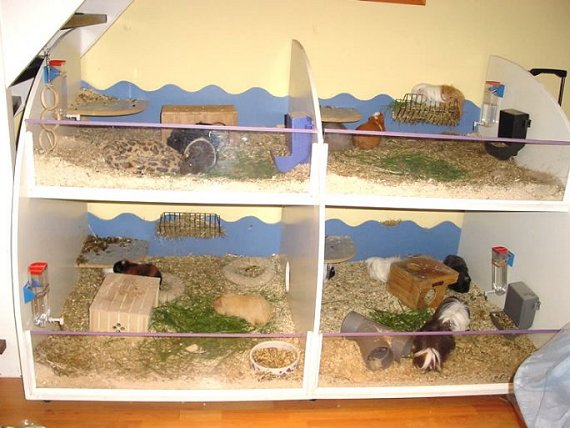 11guineas' custom home for her guinea pigs.