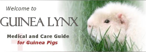 Welcome to Guinea Lynx :: Medical and Care Guide for Guinea Pigs
