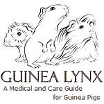 Guinea Lynx